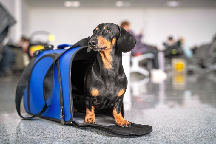 Tips for moving overseas with pets. These tips will help you navigate through the process of an international move