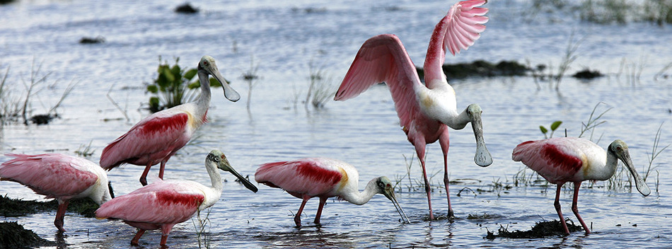 clute texas national wildlife